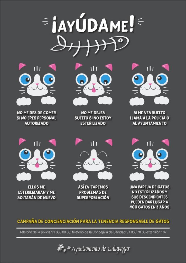 ayuda-gatos-galapagar